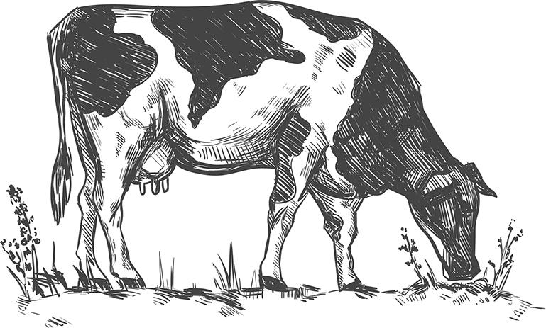 Fromage de vache vienne