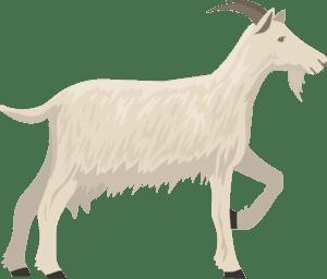 Fabrication du fromage de chèvre